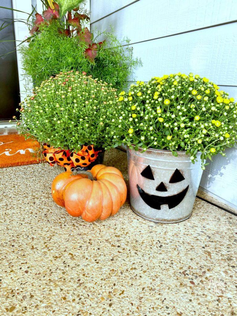 mums, pumpkin,