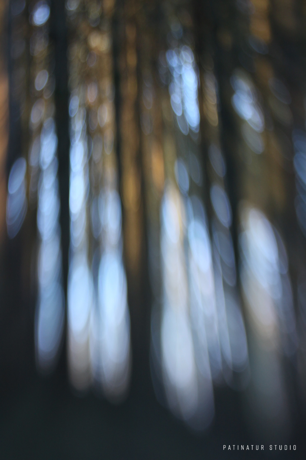 Photo art   Abstract close-up winter forest