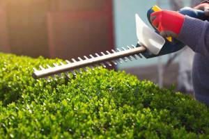 Best Hedge Trimmer – Buyer's Guide