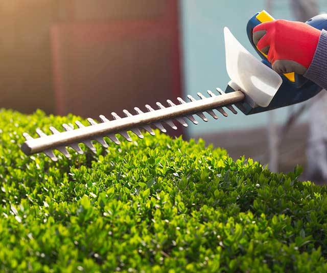 Best Hedge Trimmers - Buyer's Guide