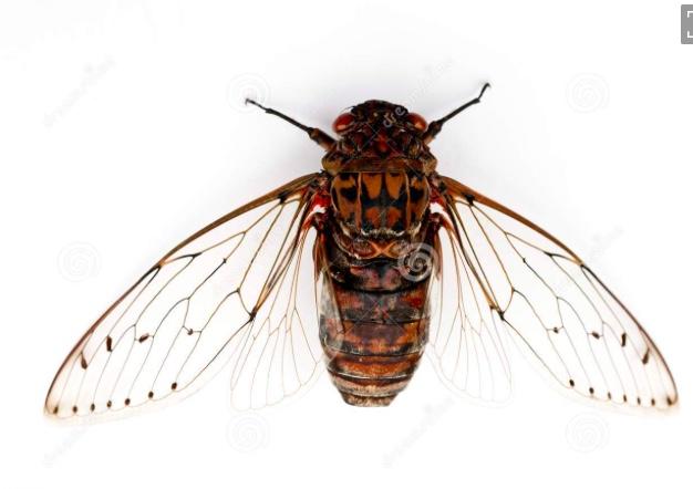 A short story – Cicada Song