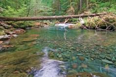 Brietenbush creek rocks and log