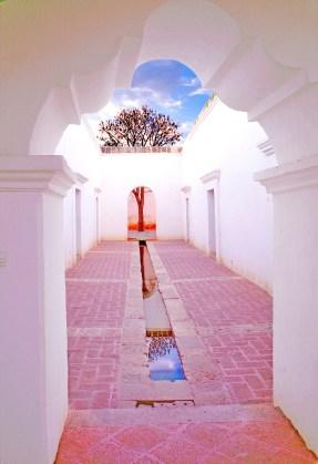 Courtyard and Tree Oaxacaq