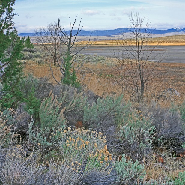 Desert Flora in Winter, Lake Abert