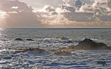 Point Lobos Pelican Flight copy