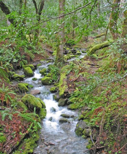 Thomas Creek, Lower Rogue River