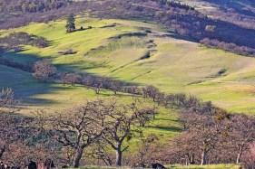 Oak &Fir Trees on Green Ashland hills