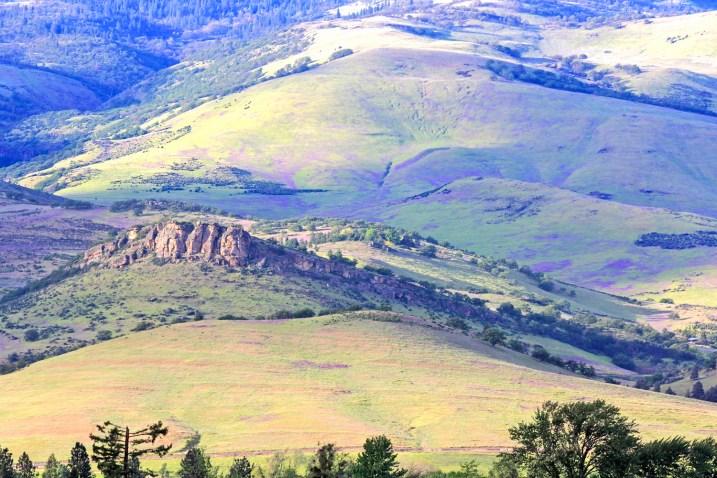 ashland hills pompador and vetch
