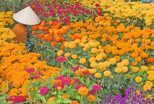 cantho marigolds w vendor close
