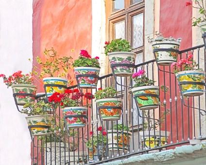 guanajuato geraniums