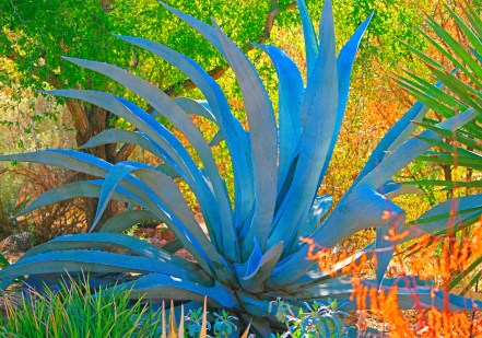 suprstitions agave arizona