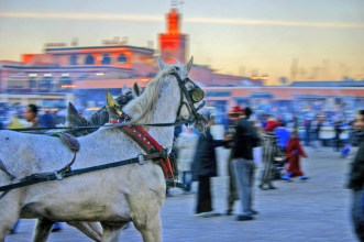 Marrakech horses Jema Fna hdr