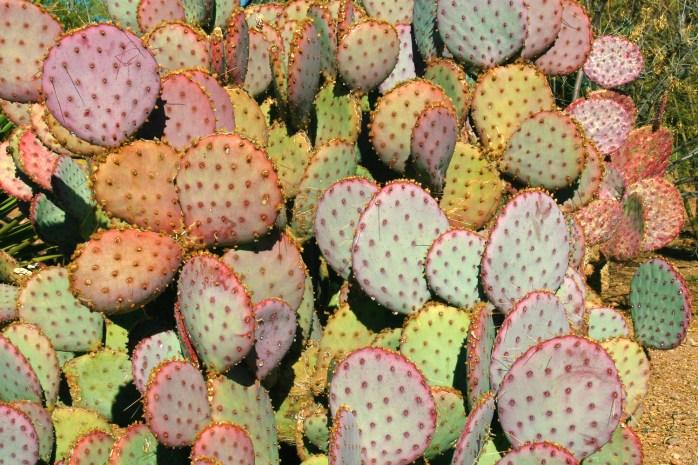 cactus mosaic