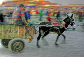 marrakech donkey cart hdr