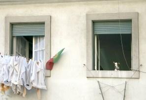 ptgl lisbon dog windows