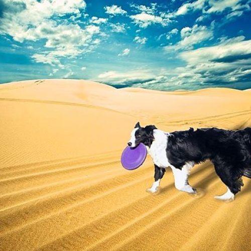 砂漠に行った風なパクチー。