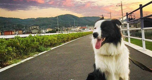 夕焼けが綺麗だね。明日も晴れるかな?