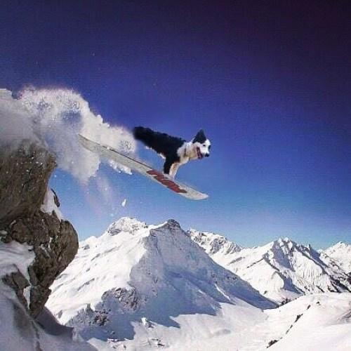 スノーボードしちゃうよ!#ノリノリ犬 #dogontop #onthetop