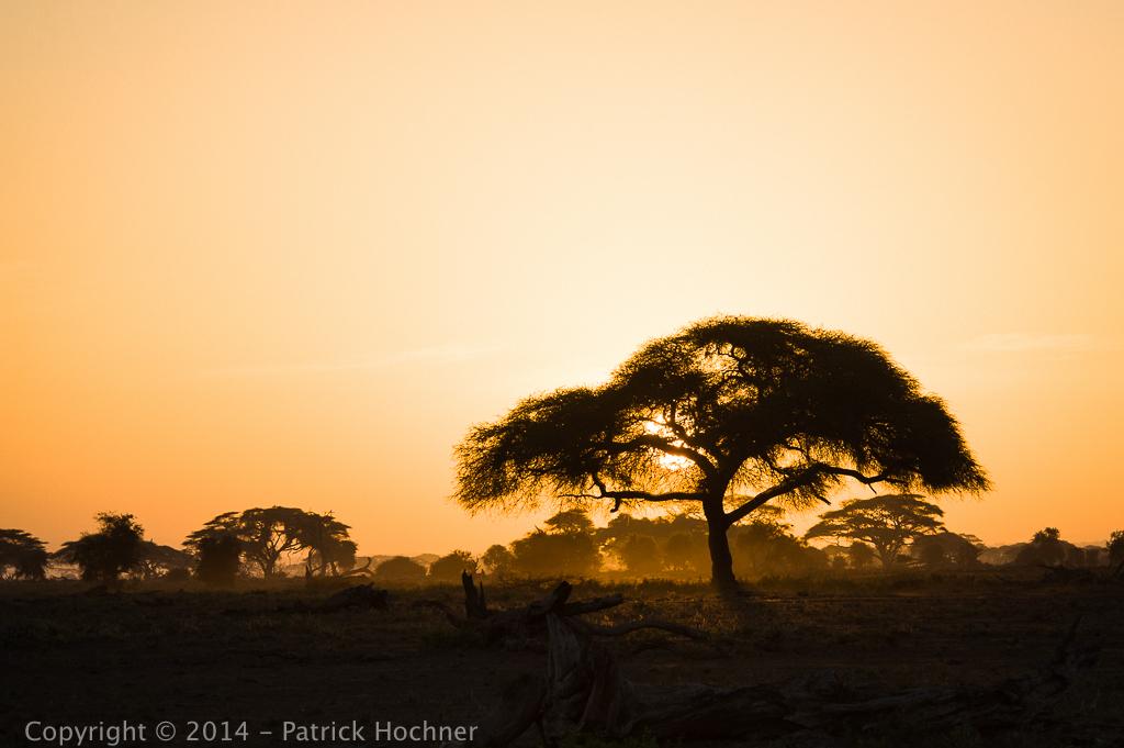 Amboseli Park, Kenya
