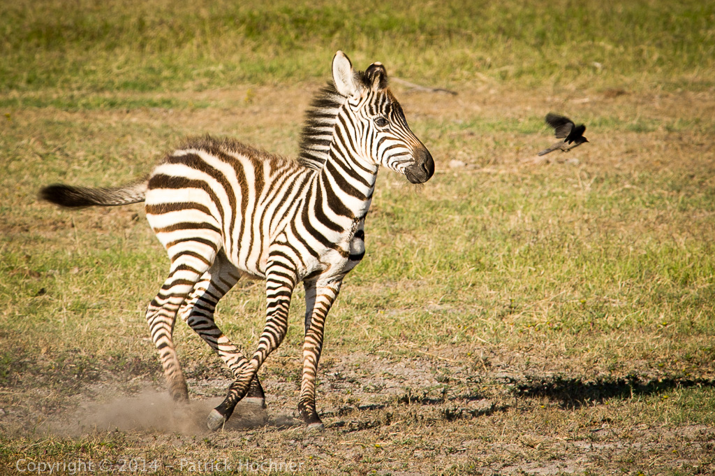 Children's game, Amboseli Park, Kenya