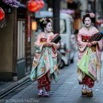 Maiko walking around Miyagawa-Cho, Kyoto