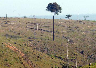 O CAR é um sistema eletrônico que integra as informações das propriedades rurais e será a base de dados para o controle, monitoramento e combate ao desmatamento no Brasil