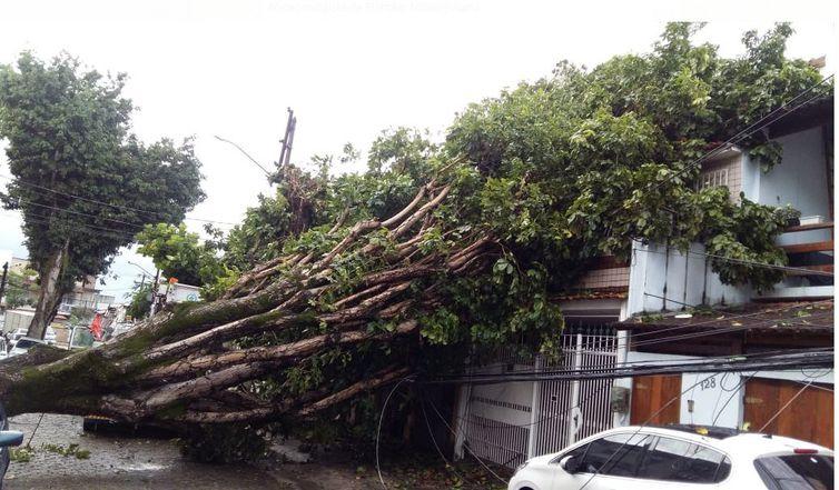 Na Ilha do Governador, árvore caiu sobre uma casa