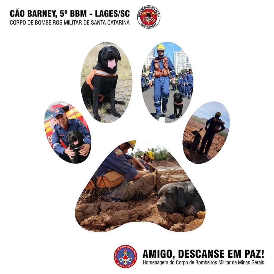 Homenagem Corpo de Bombeiros de Minas Gerais Cão Barney
