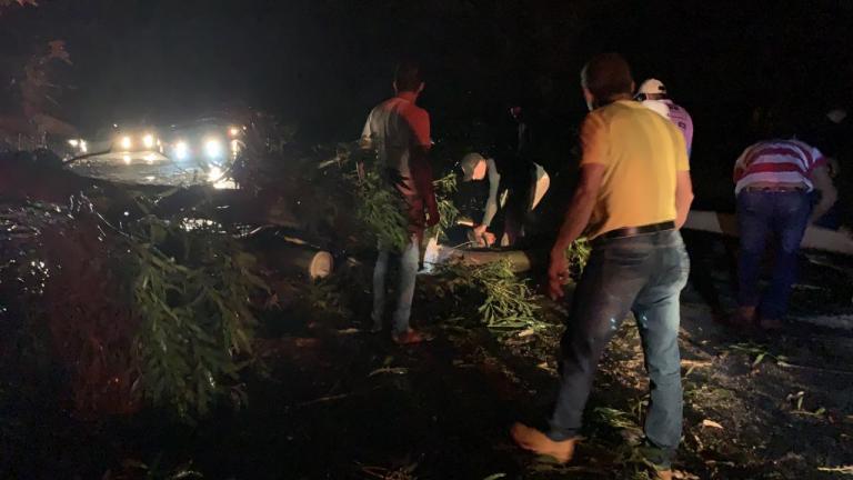 Vendaval derruba eucalipto em rodovia entre São Gotardo e Matutina
