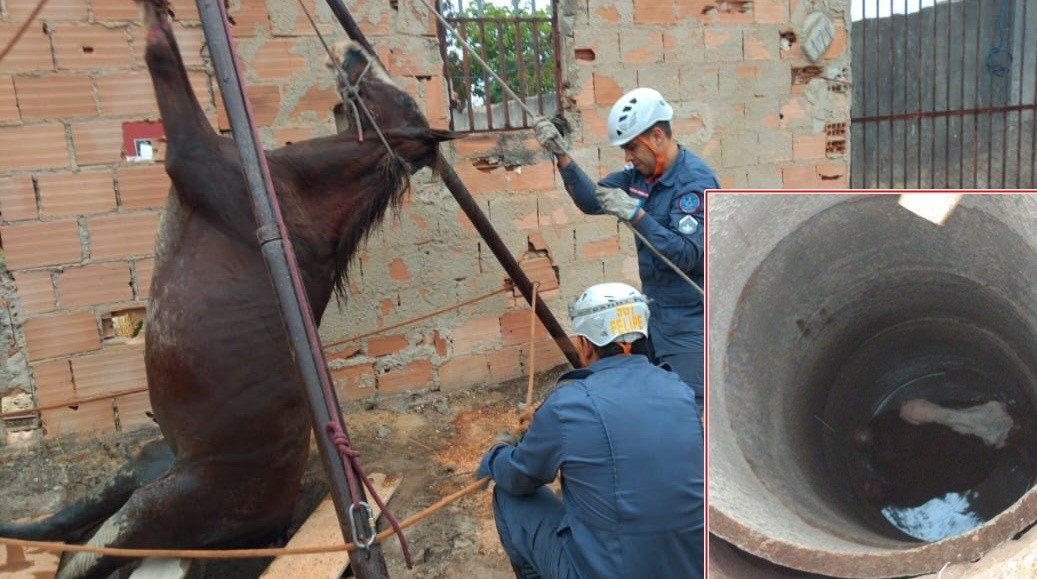 Cavalo cai em fossa e é resgatado pelos Bombeiros