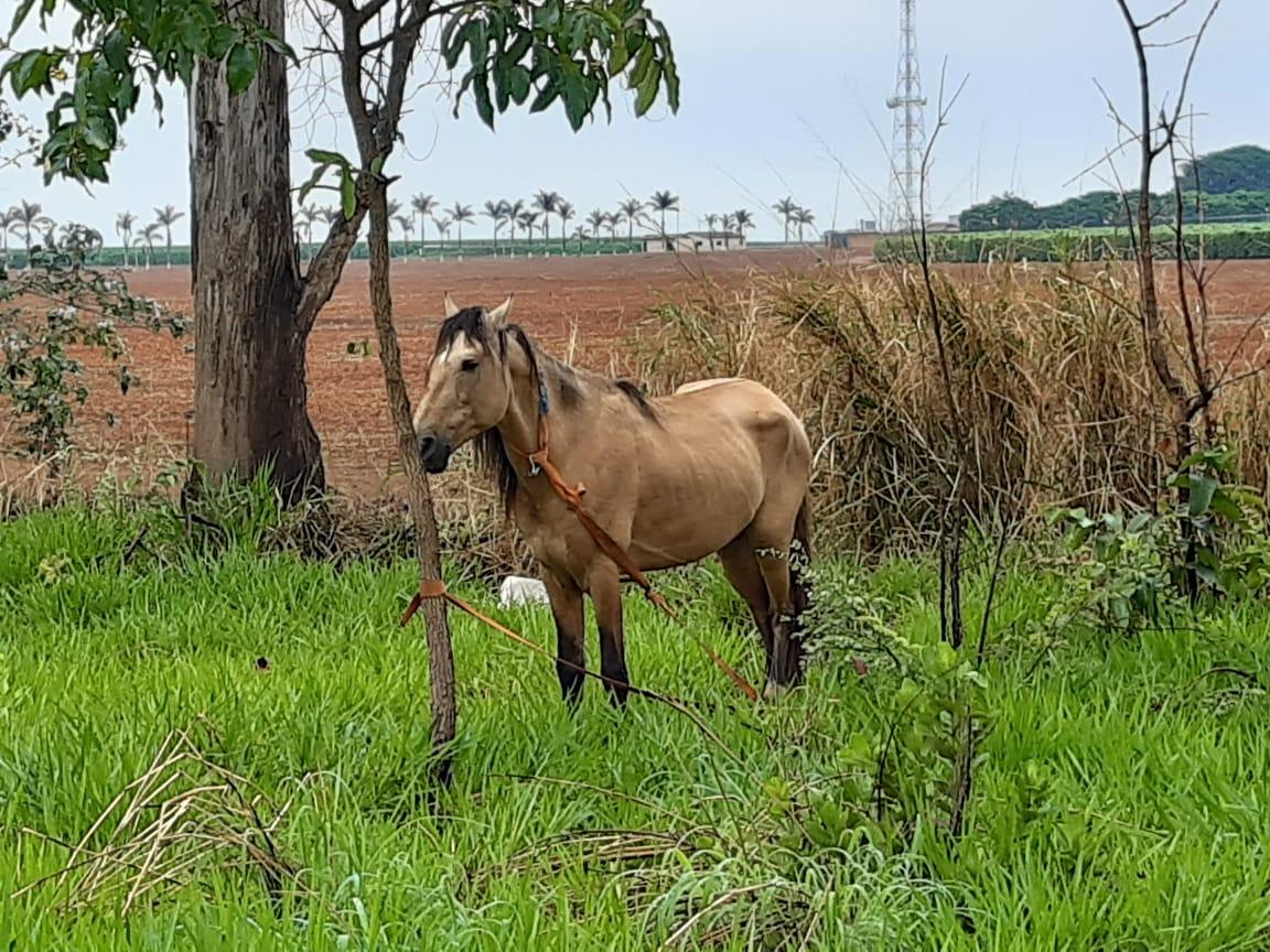 Cavalo MGC 354 Presidente Olegário