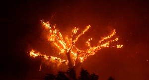 Incêndio mata do catingueiro
