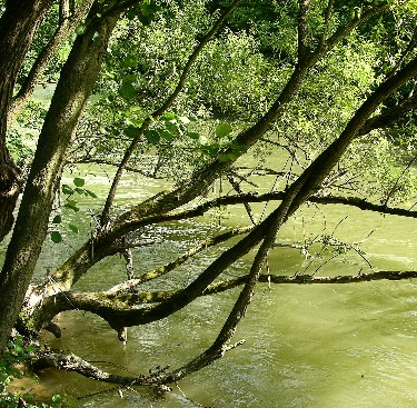 copac-aplecat-peste-apa.jpg