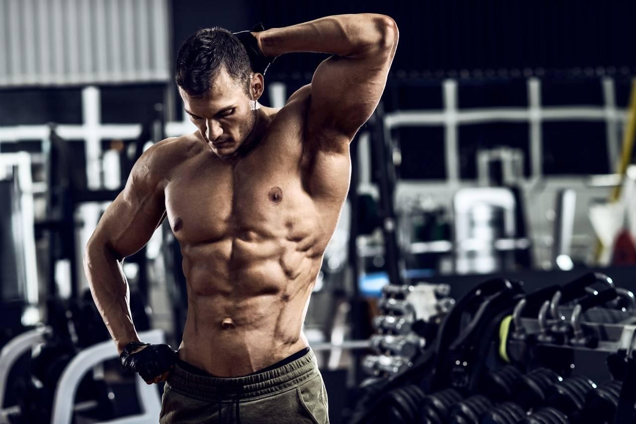 Muskelaufbaupotenzial steigern: 3 nebenwirkungsarme Myostatin-Hemmer, auf die du zurückgreifen kannst | Studien Review