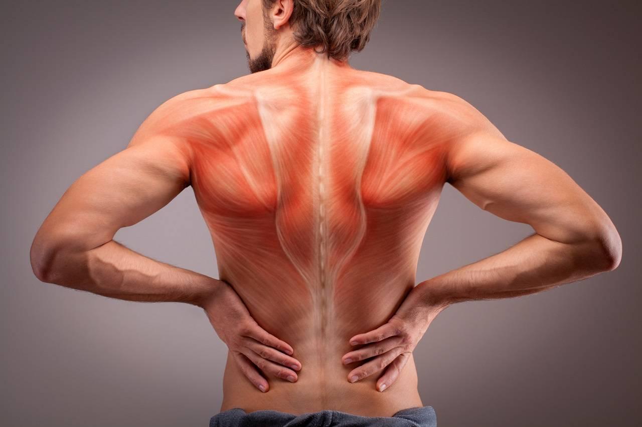 Kraftttraining zur Behandlung unspezifischer Rückenschmerzen   Studien Review