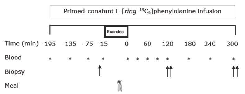 Das Studien-Protokoll. Blood = Blutprobe; Biopsy = Muskelbiopsie-Entnahme; Meal = Mahlzeit; Exercise = Training.