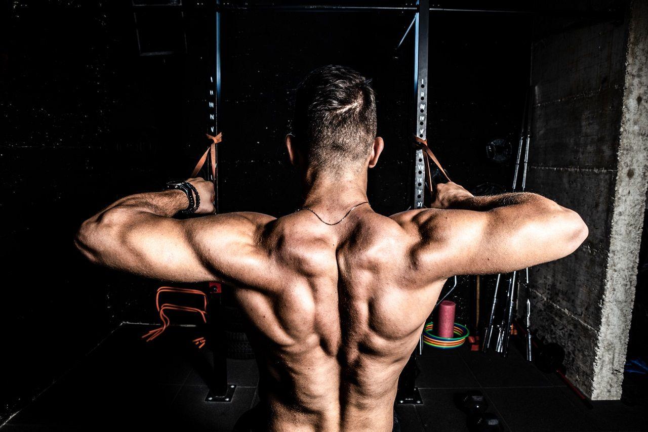 Trainingseffekte I: Grundlagen der Anpassung & Adaption im Zuge des Kraftsports