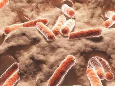 Darmbewohner: Wie die Darmflora unsere Gesundheit beeinflusst | Zwischen Hype & Wissenschaft