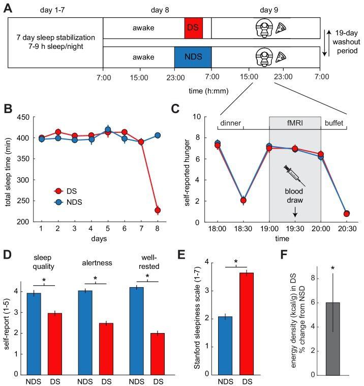 """Experimentelles Design und Verhaltenseffekte von Schlafentzug: (A) Studienprotokoll für Sitzungen mit reduziertem Schlaf (DS) und nicht-reduziertem Schlaf (NDS) mit einer 19-tägigen Auslaufphase (Wash Out Periode). Das Abendessen wurde um 18 Uhr serviert, die fMRI-Sitzung begann um 19 Uhr, und dass ad libitum-Buffet begann nach 20 Uhr. (B) Die Actigraphiedaten zeigten keine Unterschiede in der Schlafdauer während der Schlafstabilisierungsphase, bestätigten aber einen signifikanten Unterschied zwischen den beiden Schlafbedingungen in der Nacht der Schlafmanipulation (Tag 8). (C) Die Ratings des Hungers auf einer visuellen Analogskala zeigten signifikante Effekte der Zeit, aber keine schlafabhängigen Effekte. (D) Während der DS-Phase (im Vergleich zur NDS-Phase) berichteten die Teilnehmer über eine geringere Schlafqualität, eine geringere Aufmerksamkeit und eine geringere Ausgeruhtheit. (E) Die """"Stanford Sleepiness Scale""""-Werte lagen in der DS-Phase höher. (F) Energiedichte (kcal/g) der Lebensmittel, die nach dem Scannen am Ad-libitum-Buffet konsumiert wurden, ausgedrückt als prozentuale Veränderung gegenüber der NDS-Basislinie. *p<0.05. Die Daten werden als Mittelwert ± SEM dargestellt."""