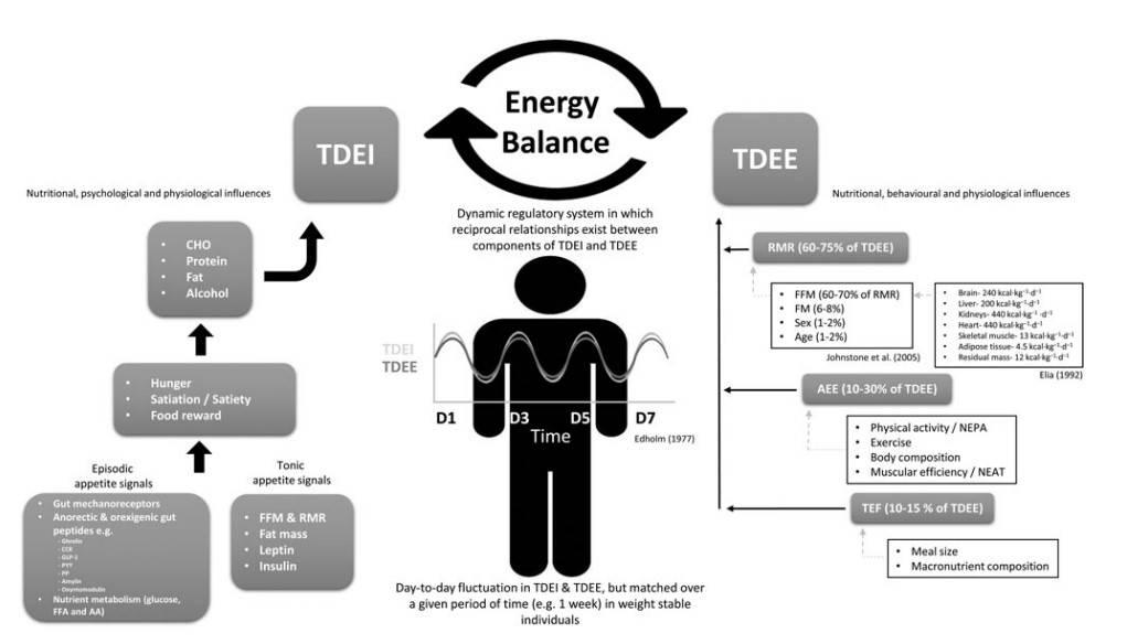 Schematischer Überblick über Faktoren, die die tägliche Energiebilanz beeinflussen. Legende: TDEI = Energiezufuhr; CHO = Kohlenhydrate; TDEE = Energieverbrauch; RMR = Grundumsatz; FFM = fettfreie Masse; FM = Fettmasse; AEE = Aktivitätsenergieverbrauch; NEAT = bewusste und unbewusste Bewegung; TEF = nahrungsinduzierte Thermogenese. (Bildquelle: Casanova et al., 2019)