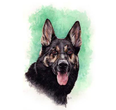 "Linda's Shepherd - This is a 11""x14"" Watercolour Painting commissioned by Lisa and Joanne as a present for their friend, Linda of her beloved German Shepherd. Such an intense fellow!!!"