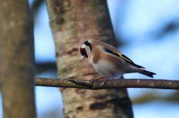 Reddish Vale wildlife