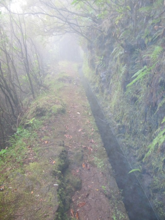 Levada in the mist.