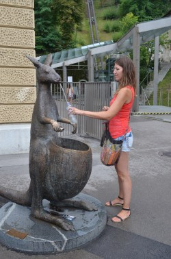Drinking from the kangaroo fountain.
