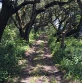 Gorgeous trail running.