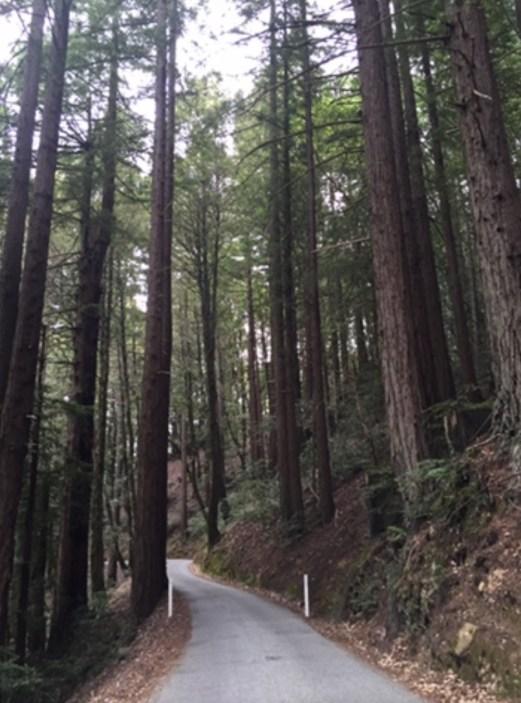 Redwood roads.