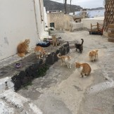 We visited an old town that was run by cats.