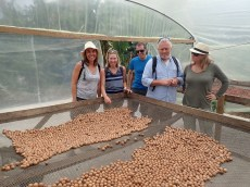 Drying the cocoa beans.