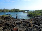 Moreno Point is located near Elizabeth Bay on the west coast of Isabela Island.