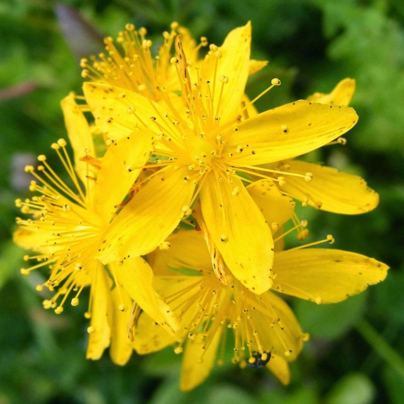 hipersensibilidad-patricia-daza-terapeuta-flores-de-bach